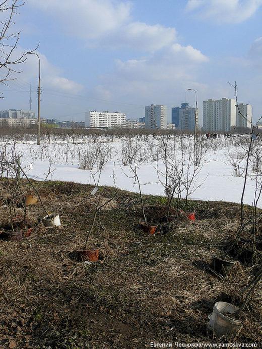 Мичуринский сад основан в 1936 году. Горожане могут приобрести здесь саженцы для своих дачных участков.