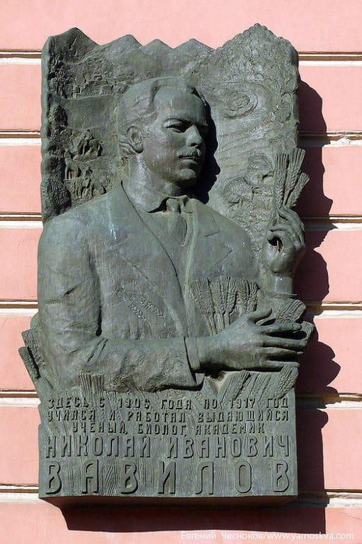 Николай Вавилов - организатор и участник ботанико-агрономических экспедиций - внёс существенный вклад в разработку учения о биологическом виде.