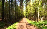 Субботник в Тимирязевском лесу